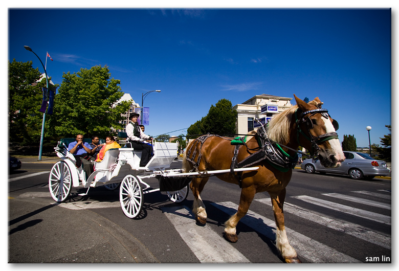 Horse-Drawn Carriage, Victoria